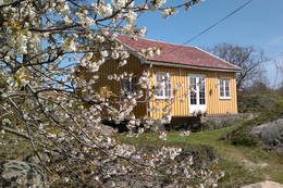 Flere frukttrær ved hytta på Tømmerstø. - Foto: Frank-Werner Unsgaard