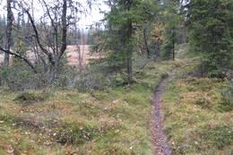 Fin skogssti mot Fagerdalen -  Foto: Jørn Magne Forland