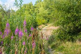 På vei inn i Sørmarka gror stien nesten igjen midt på sommeren.  - Foto: John Petter Nordbø