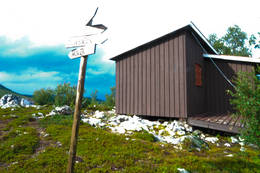 Blåkollkoia - Foto: Hallgrim Rogn
