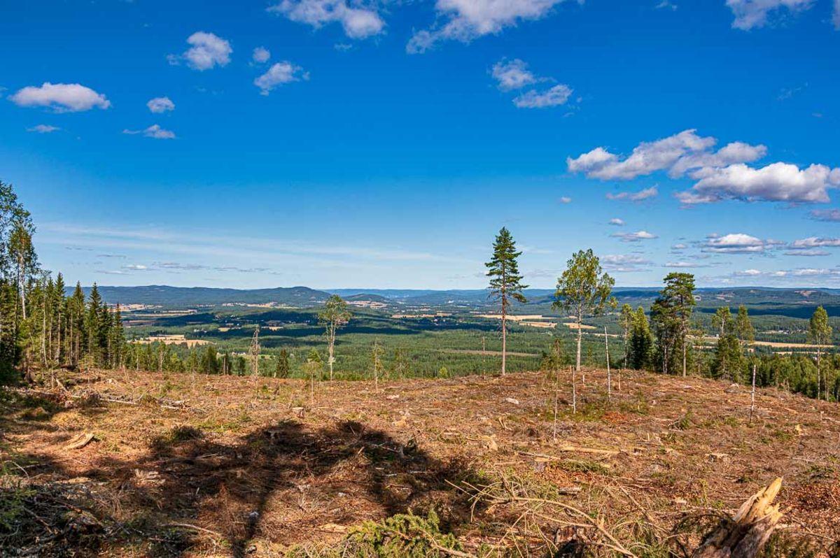 Utsikt mot Sør-Odal fra Almåsen