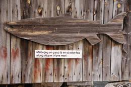 Storfisk i Eikesdalsvatnet - Foto: Arne Kavli