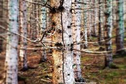 Kanskje du vil gå utenfor stien, og i stedet snike deg fram blant tette trær? -  Foto: Tina Marii Skare