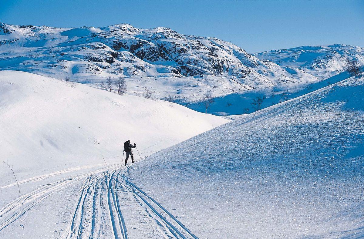 Området rundt Taumevatn har stabile snøforhold i et spennende terreng. Området er kvistet om vinteren
