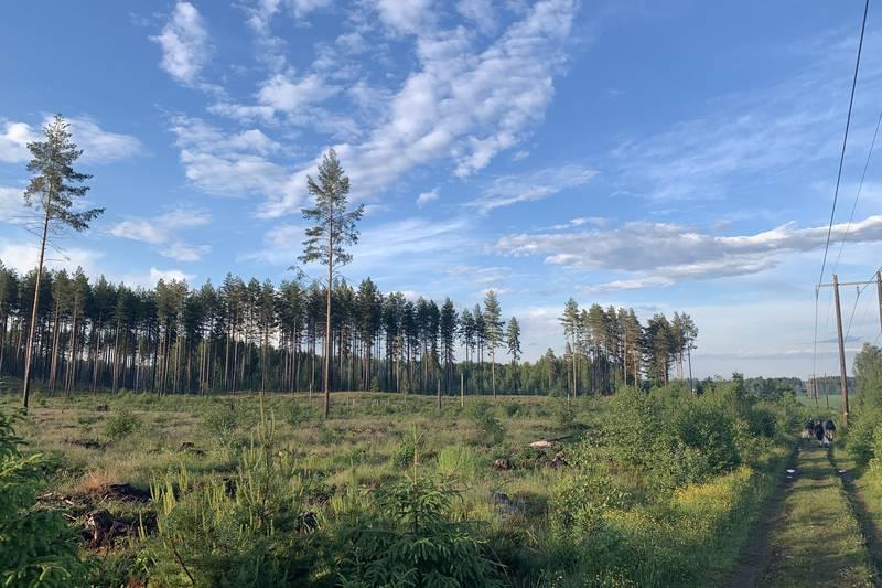 Variert skog