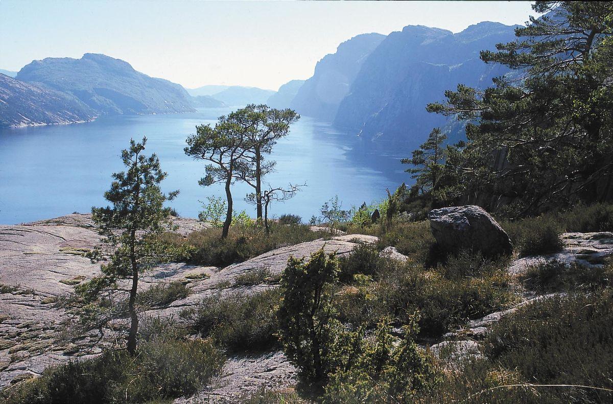 Få minutters gange fra gården er det flott utsikt mot Lysefjorden