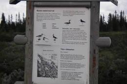 Flere skilt-tavler i området gir god informasjon om historie, våtmark og berggrunn  - Foto: Ukjent