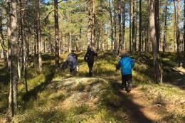 Fin skogssti - Foto: Roger Heimdal