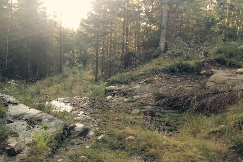 Når skogsbilveien etter Støletjønn begynner å gå nedover igjen, er det fristende å ta veien til høyre. Men du må holde rett frem