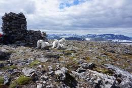 Toppen av Kråkvasstinden. - Foto: Oddveig Torve