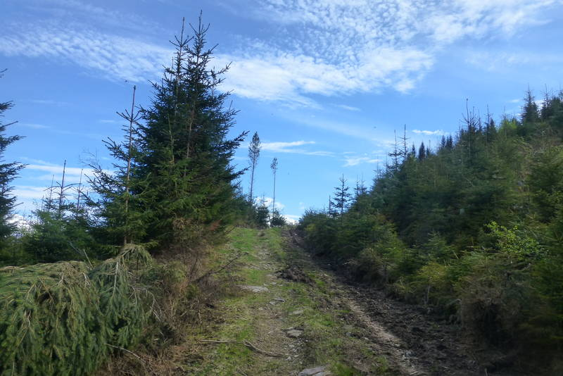 Turen går på skogsveg og sti