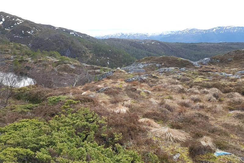 Frå vestenden av Hornfjellvatnet føl du den merka stien nedover