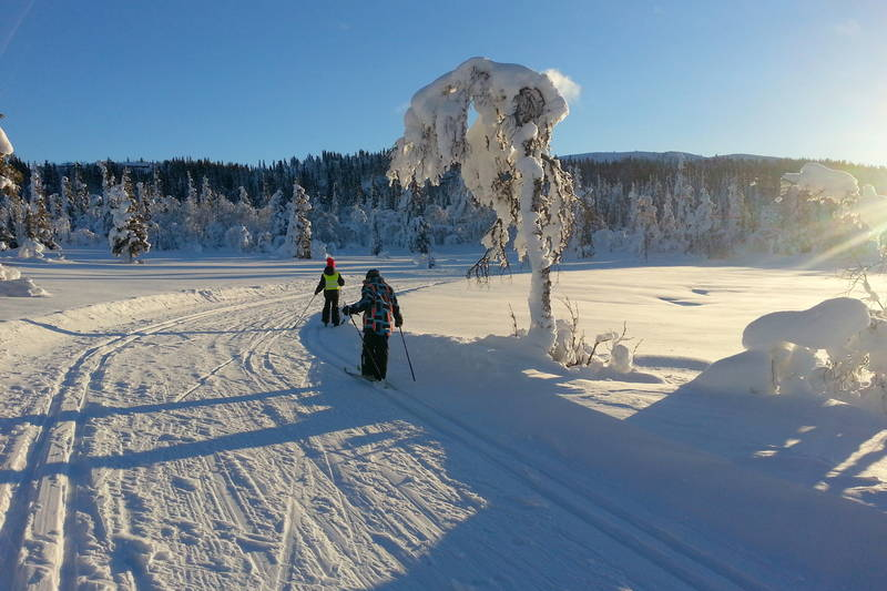 Skitur til Blåbærhaugen ved Svarthammarlia