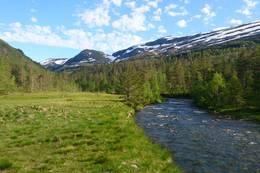 Tordalen -  Foto: Kjell Inge Tufte Tyssen