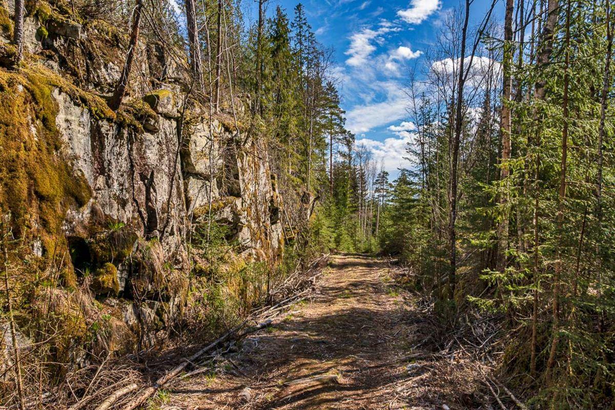 Skogsveien over Korpeberget