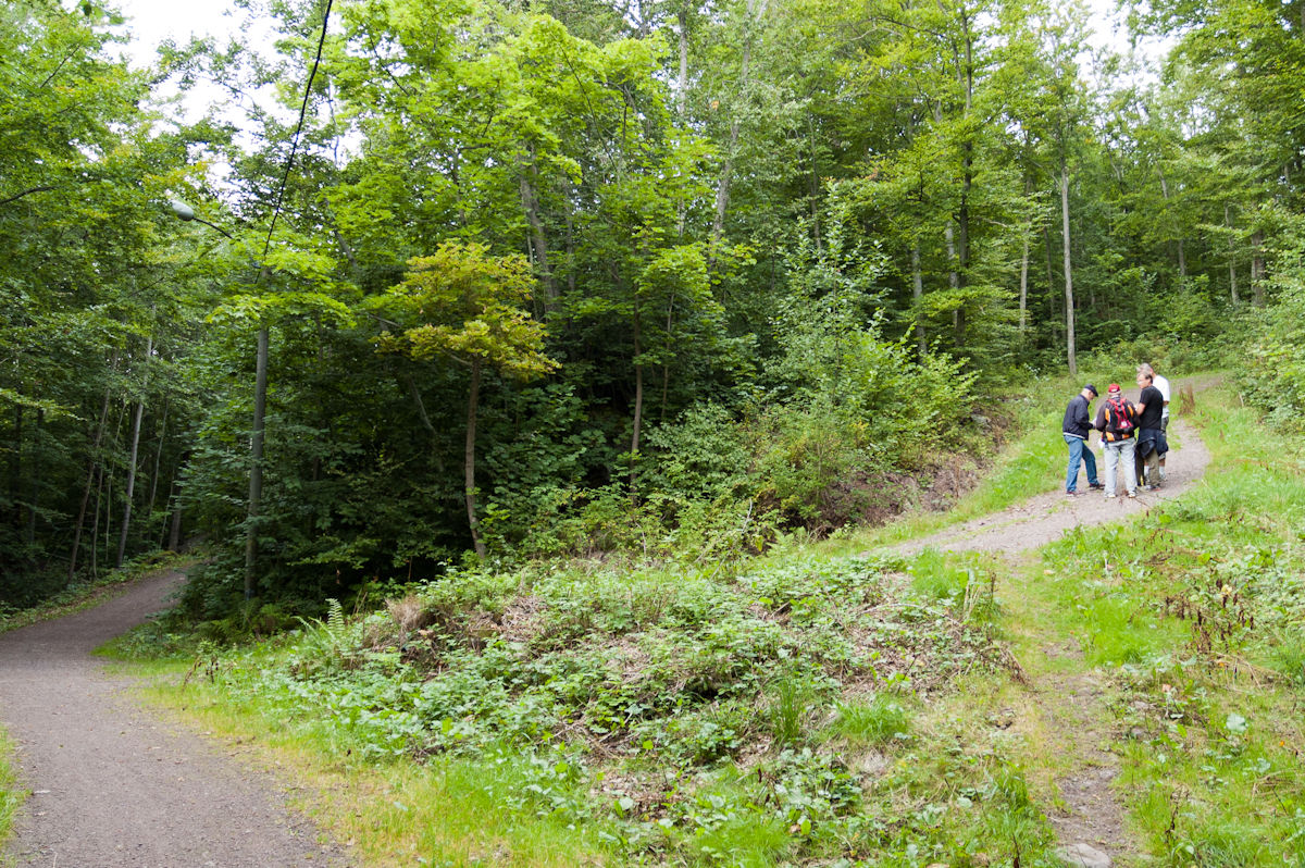 Stien opp fra Borrevannet.