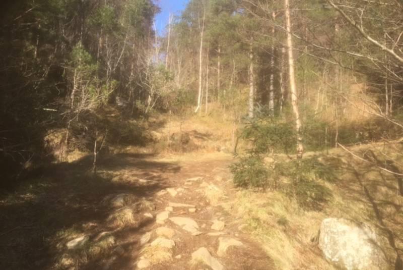 Her tar du av frå skogsvegen. Gå rett fram og følg stien/hovedtråkket i terrenget.