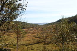 Høst på Kløstermyra -  Foto: Martin Hanssen