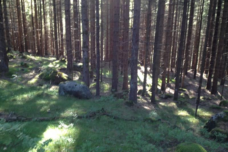 Nydelig gammel skog