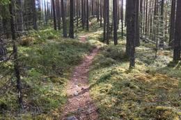 En trivelig sti fra Utsikten til Paddedokk -  Foto: Solveig Hjallen