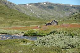 Seter i Fleskedalen - Foto: Helle Andresen