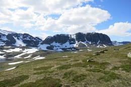 Ljøtebotn er barsk og spektakulær fjellnatur - stein, is, snø, - og frodig flora - Foto: Frede Thorsheim