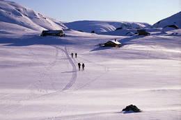Storslagent skiterreng rundt Storsteinen - Foto: Stavanger Turistforening