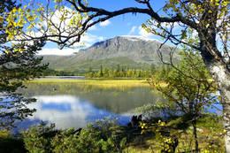 Skogshødn 1728 moh - Foto: Ukjent