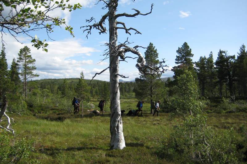Dag 2: På veg fra Kvitfjellhytta mot Prestøyhytta.