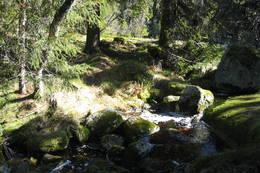 Siddistien går gjennom Sondalsfjell Naturreservat -  Foto: Kjell Buene