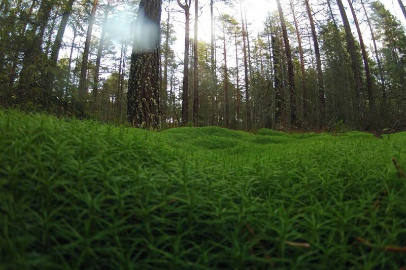 Varriert og fin skogsbunn