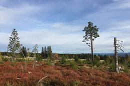 Utsikt mot tårnet - Foto: Margrete Ruud Skjeseth