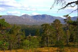 Skarven fra Kvitfjellhytta - Foto: NTT