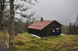 Storekarkkoia - Foto: Marius Nergård Pettersen