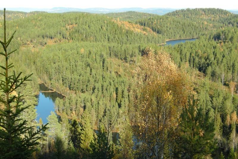 utsikt Svelvikmarka Røysjømarka