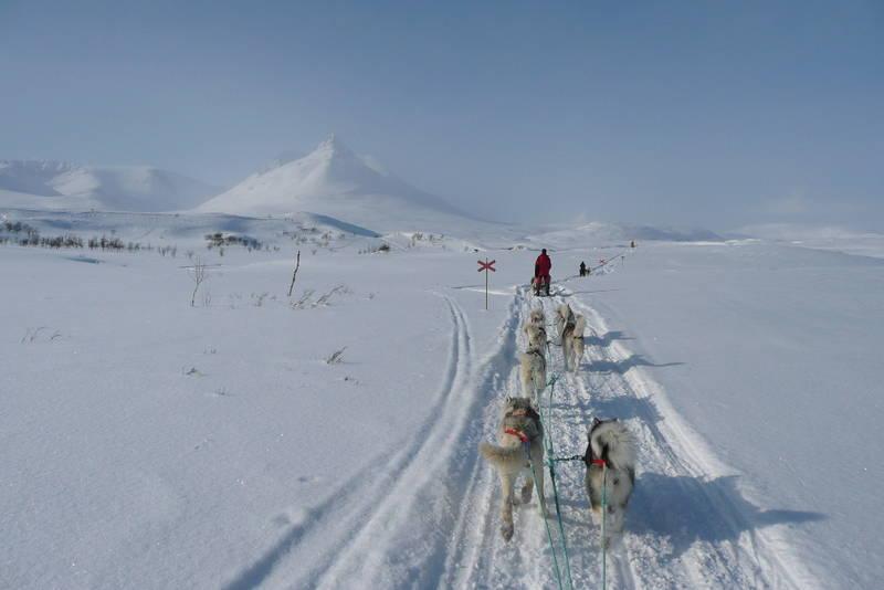 Huskytur i Troms