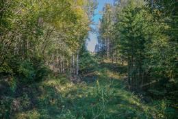 Skogsveien ved Steindalen - Foto: Øystein Berntsen