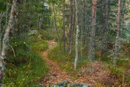 Stien går i lett terreng - Foto: Øystein Berntsen