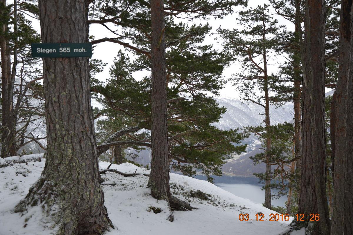 Stegen 565 moh