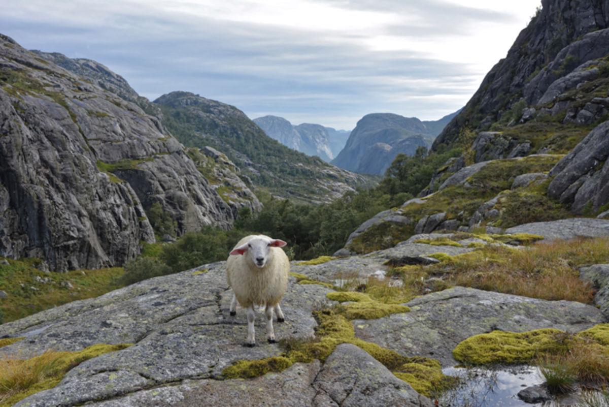 Utsikt fra platået ovenfor Skåpet.