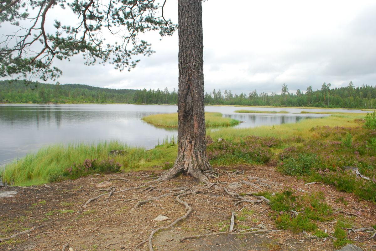 I Buvannet er det fint å fiske. Men det er trolig vanskelig å komme helt ned til vannet med rullestol.