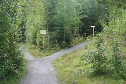 Hold høyre for Tranaleia, venstre for Ainnervein - Foto: Kathrine Kragøe - Innherred Reiseliv