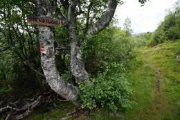 Merket sti oppover lia fra Liabø. - Foto: Oddveig Torve