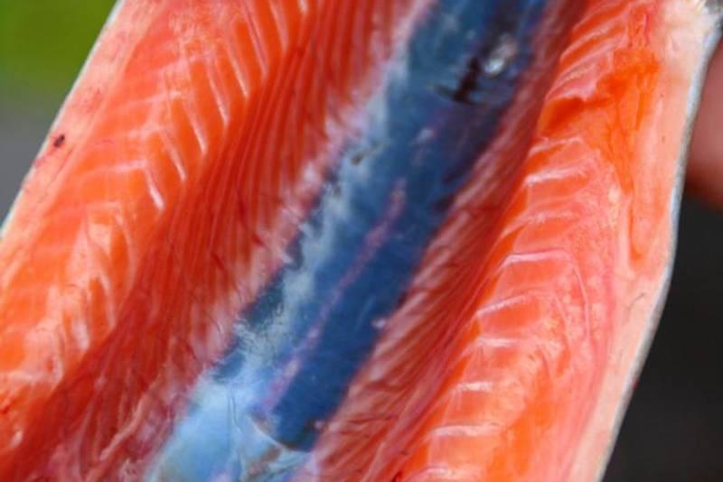 Flott fisk, Bildet er fra Ørretdagene på Stavali Turisthytte 2014