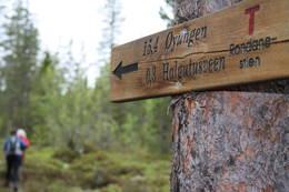 Stikryss på vei fra Bringbu og opp mot snaufjellet, 300m fra Halgutusveen - Foto: Knut Einar Nordhagen, 977 80 304