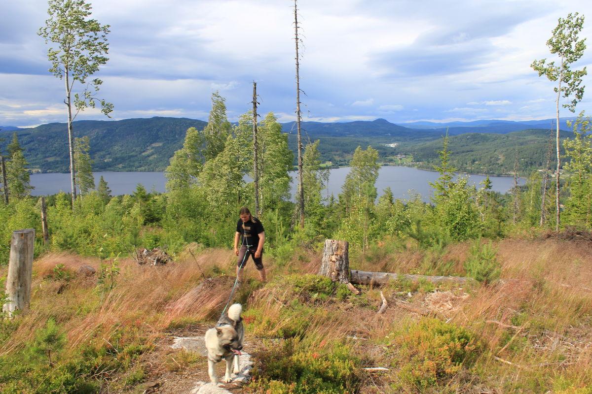 På vei opp til Fyrandflaget. Når man kommer opp lia er det fin utsikt mot Krøderfjorden og gårdene på østsiden.