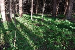 Skog -  Foto: Inga Kristin Arnøy