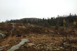 Klypefjell -  Foto: Anders Sten Nessem