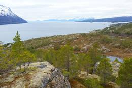 Fin utsikt over Sagfjorden - Foto: Kjell Fredriksen