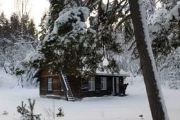 Koboltkoia i vinterskrud - Foto: Sissel Øvereng/Ingeborg Hovde